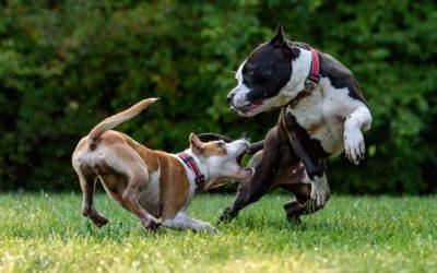 Tollwut bei Hunden und Katzen