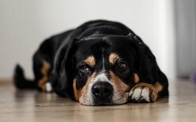 Arthrose auch beim Hund möglich?