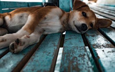Krebserkrankungen bei Hund und Katze