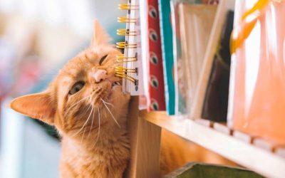 Flöhe bei Katzen