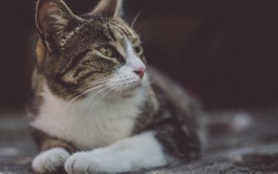 Katzenschnupfen: Was tun?