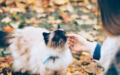 Katze frisst nichts: Mögliche Ursachen