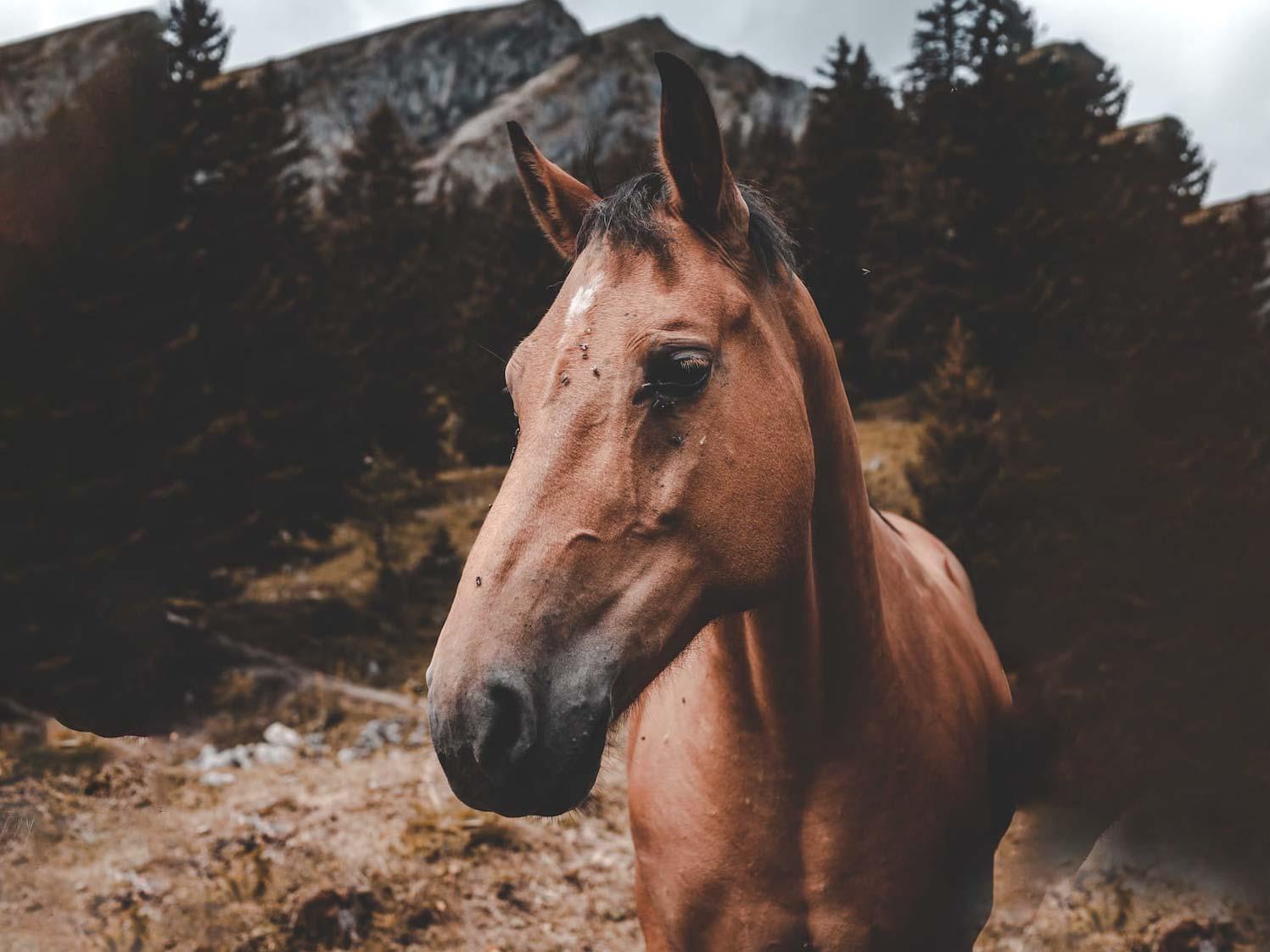 pferd mit fliegen pferdegesundheit