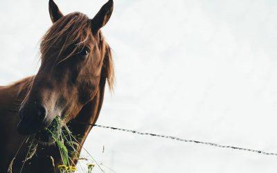 Wurmbefall beim Pferd