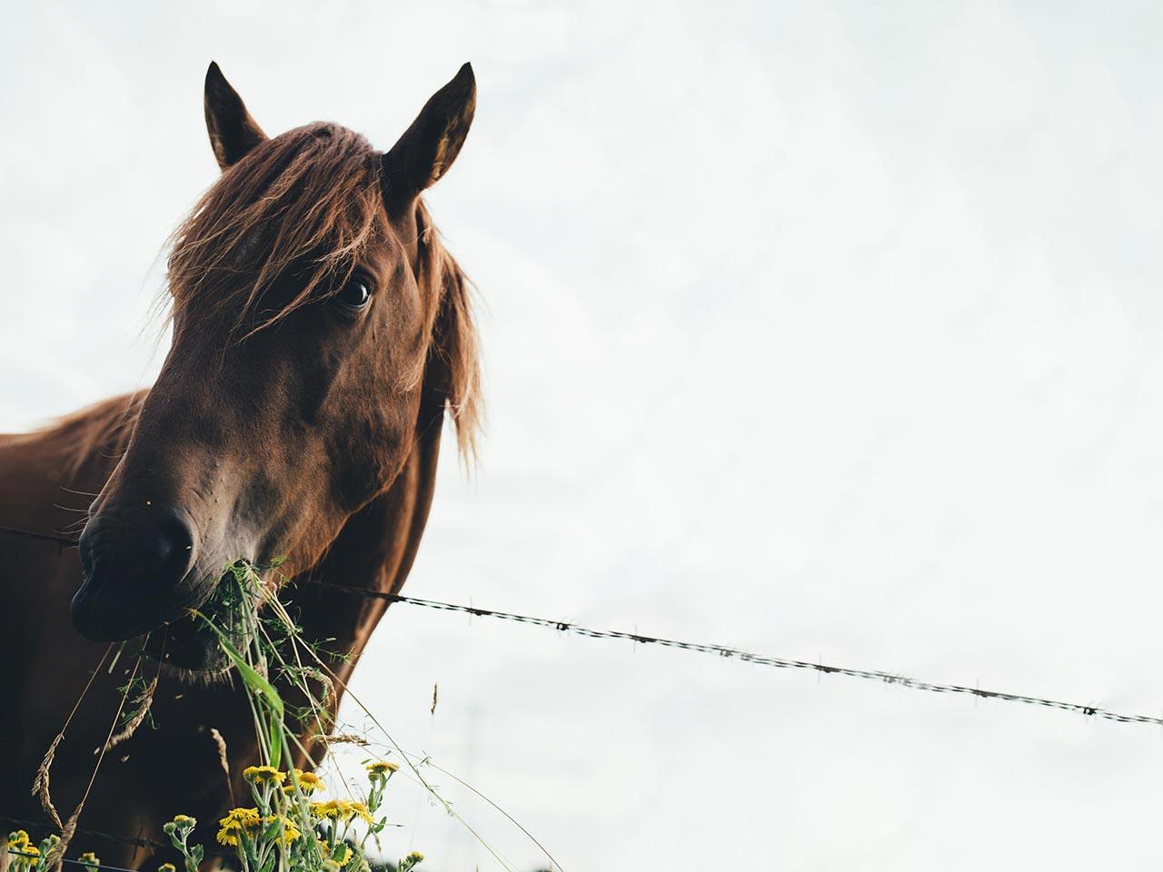wurmbefall beim pferd wurmbefall