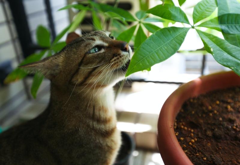 Giftige Zimmerpflanzen Katzen
