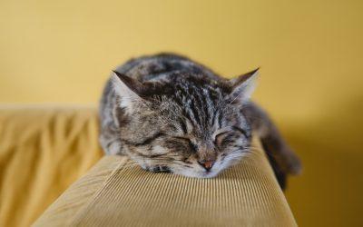 Arthrose bei Katzen