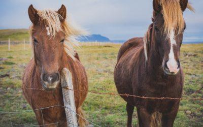 Anzeigepflichtige Pferdekrankheiten in Deutschland