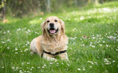 Zecken beim Hund: Das sollten Hundebesitzer wissen