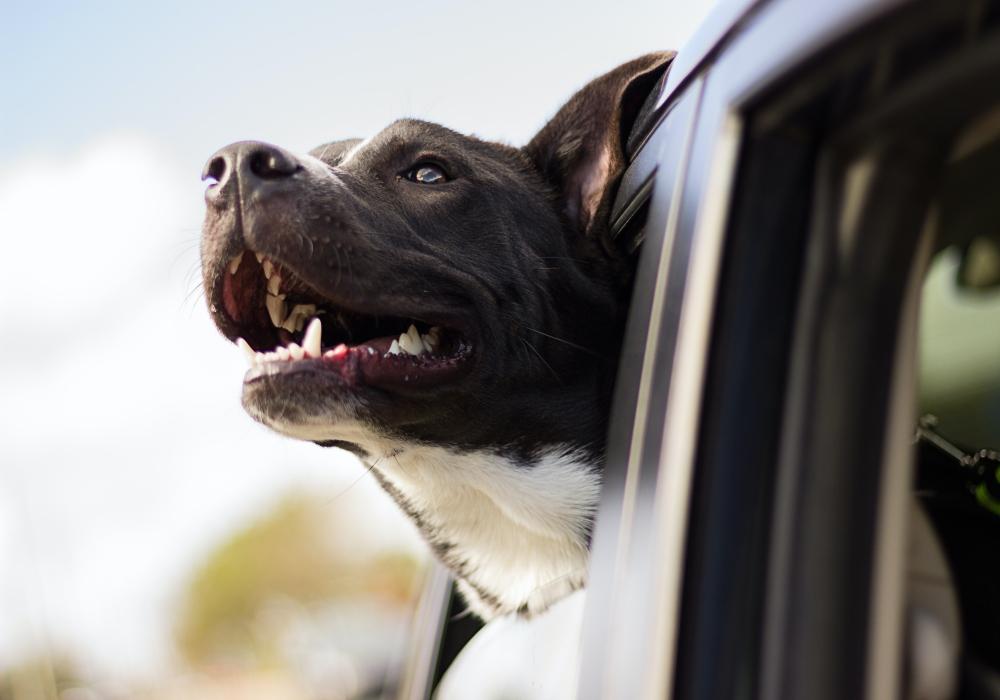 ueberhitzung-hund
