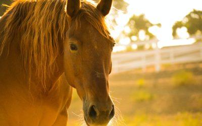 Überhitzung beim Pferd
