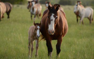 Tetanus-Impfung beim Pferd – eine wichtige Gesundheitsvorsorge