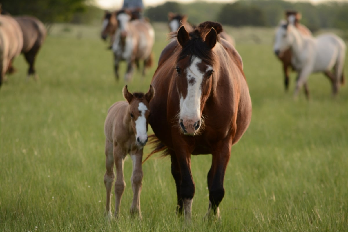 tetanus-impfung-pferd