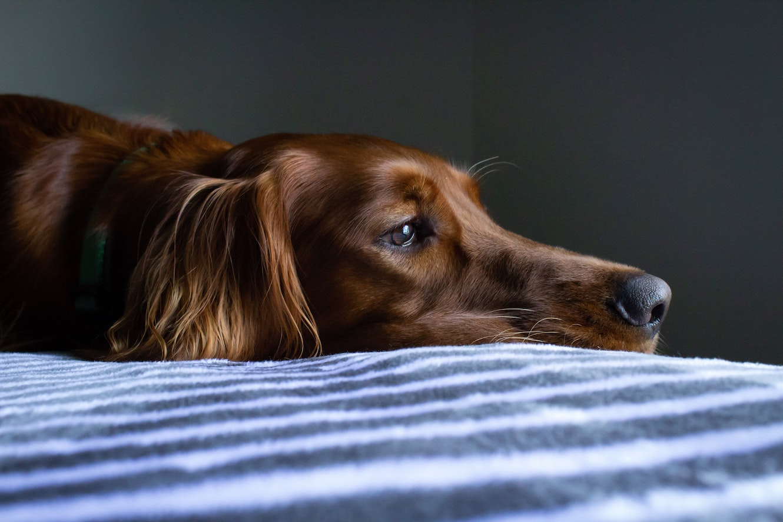 alterserscheinungen-hund