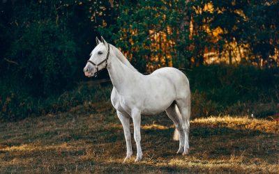 Wurmkuren beim Pferd – so geht's richtig
