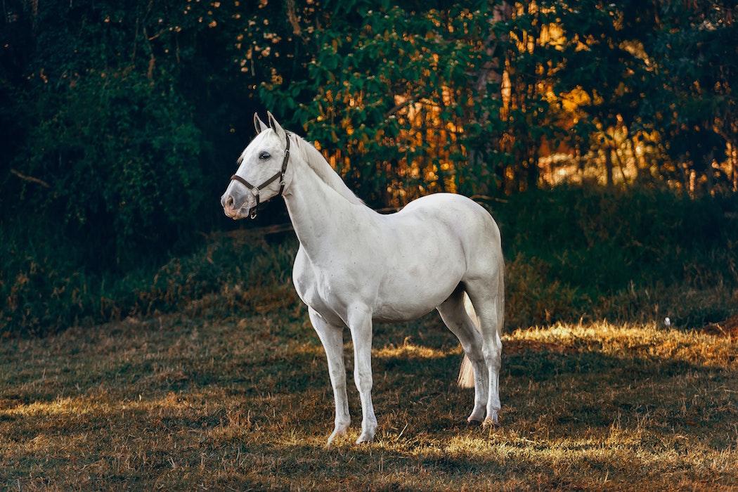 wurmkur-beim-pferd