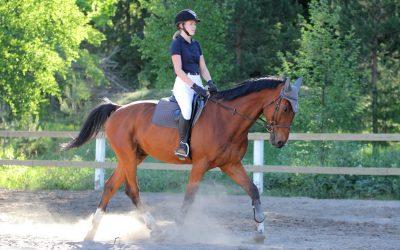 Rückenprobleme beim Pferd? Das richtige Rückentraining kann helfen