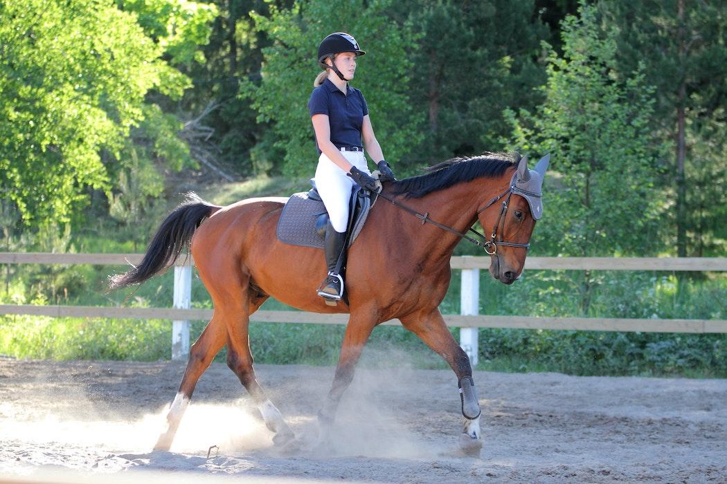 rueckentraining-pferd