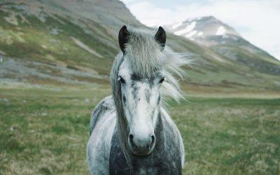 Oldies but Goldies – die richtige Versorgung alter Pferde